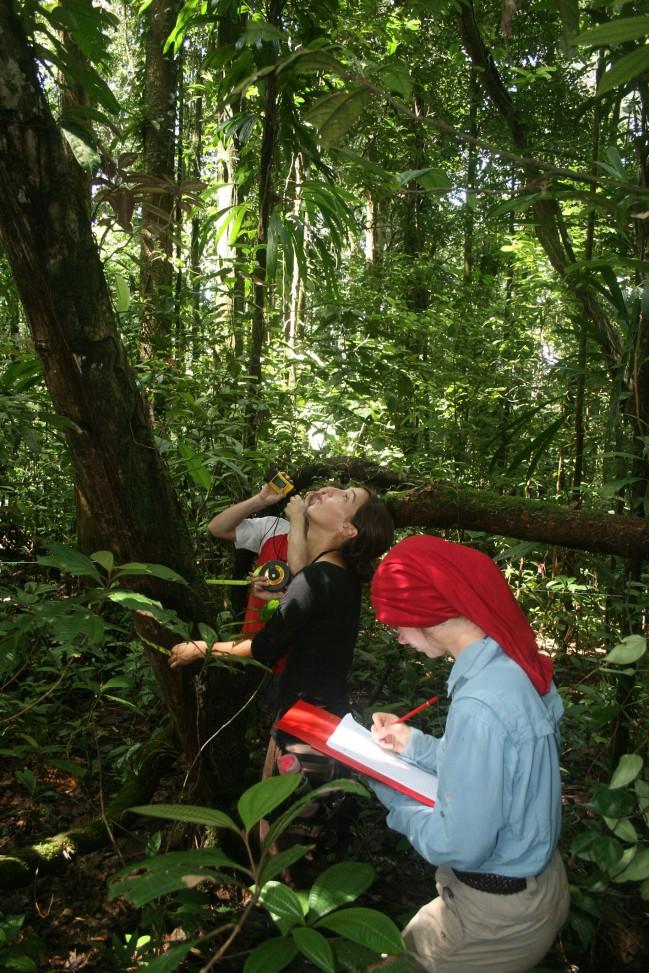 """Calcul des hauteurs des arbres et de leurs diamètres au cours des études """"Carbone"""""""