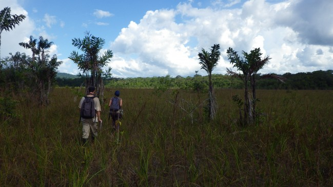 Expertise botanique dans les savanes Trésor © RNR Trésor