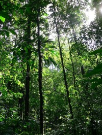Sous-bois forestier