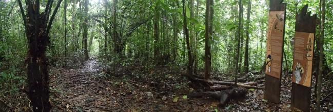 Vue sur le sentier botanique et ses totems d'information