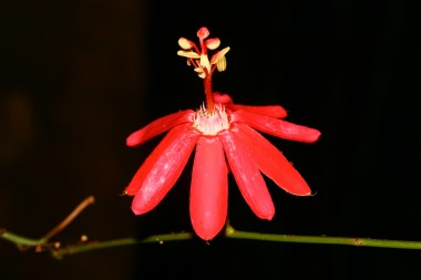 Plantes à fleurs