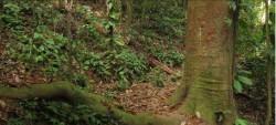 Journée internationale des forêts le 28 mars