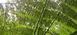 L'été des spécialistes : Fougères et plantes de sous-bois
