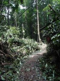 The trail is finally accessible! © Jeffrey Brand / RNR Trésor