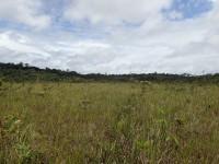 De savannes van Trésor huisvesten een tiental soorten blaasjeskruid © Benoit Villette