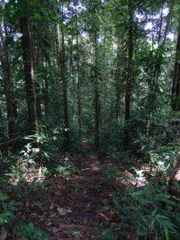 Sentier botanique © RNR Trésor
