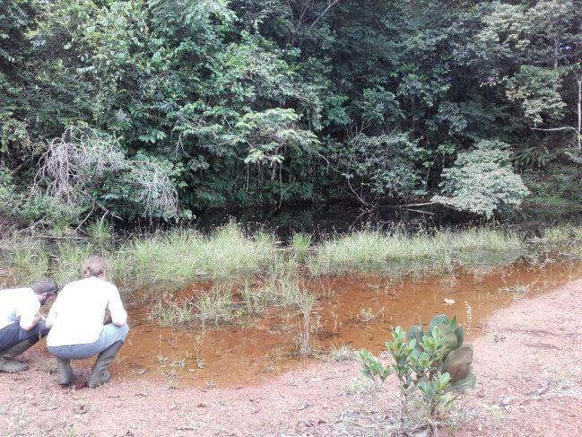 Inspection d'une mare de Guyane