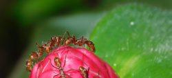 Été des spécialistes, sortie : le petit peuple des fourmis