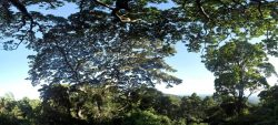 Été des spécialistes, sortie : les arbres et les métiers de la forêt