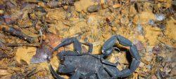 A la découverte des scorpions, vendredi 10 août
