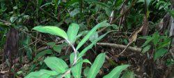 Sortie à la découverte des plantes de la réserve