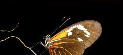 A la découverte des papillons, samedi 21 juillet
