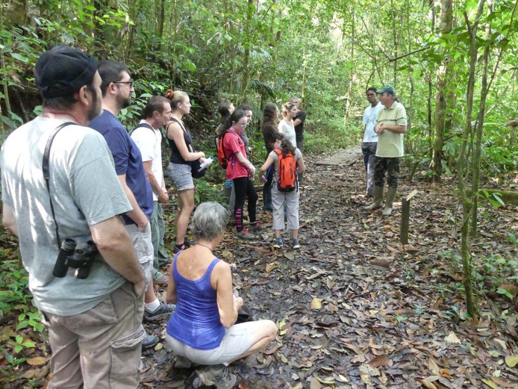 Olivier Brunaux présente le Ficus insipida de la famille des moracées