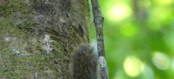 Etude de la grande faune sur la réserve